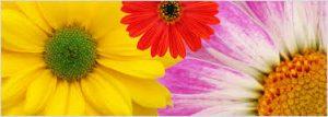 Cir_of_ Friends flowers